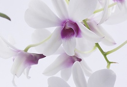Aug 22 - Orchids