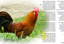 Apr 04 - Song of the rooster