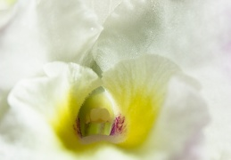 Apr 27 - Detail of a flower