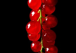Aug 03 - Redcurrants