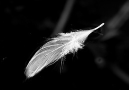 Jun 09 - Feather