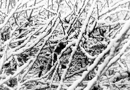 Jan 30 - Branches