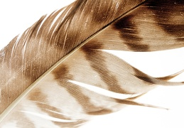 Aug 07 - Feather