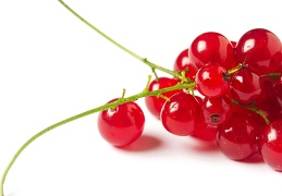 Aug 18 - Redcurrants