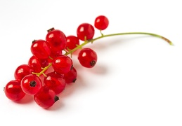 Jul 24 - Redcurrants