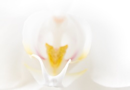 Sep 15 - White orchid
