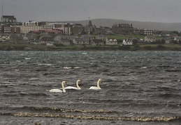 Oct 05 - Swans and the city