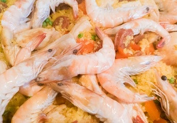 Aug 09 - Shrimps