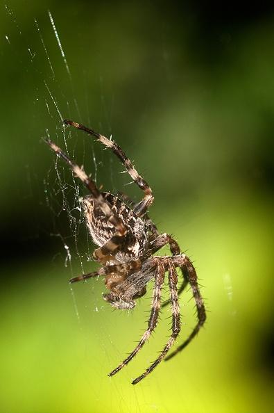 It's spider season again :(