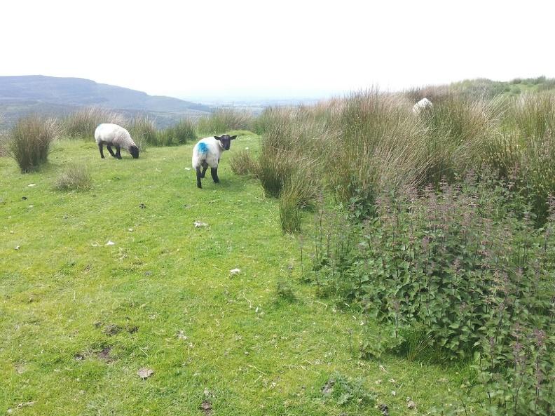 Last nature walk in Ireland. Going to Dublin tomorrow.