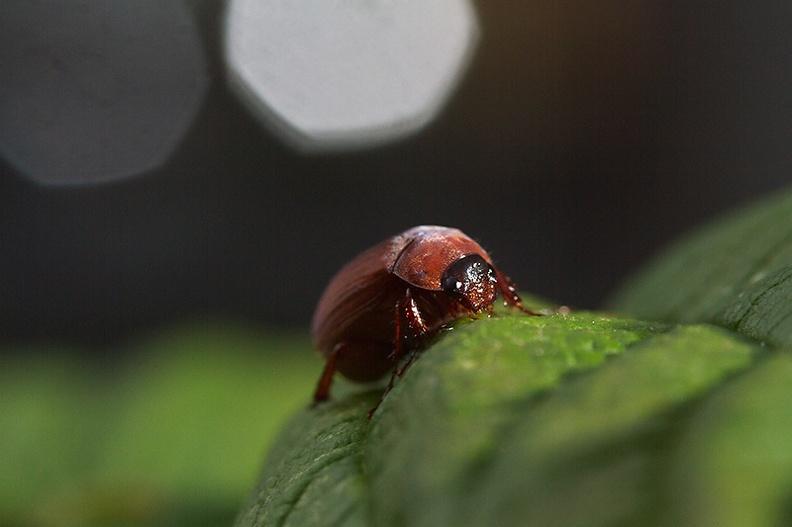 A cute little bug on my raspberry plant.