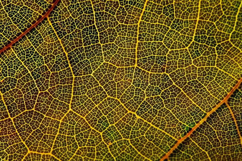 Detail of a leaf