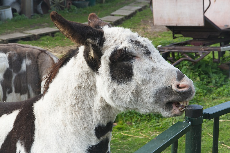 Donkey on a nice afternoon walk
