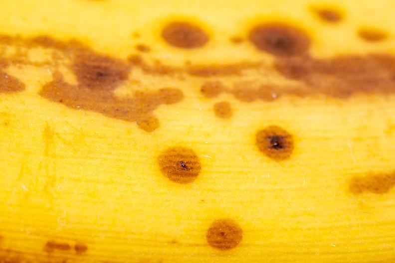 Detail of an old banana