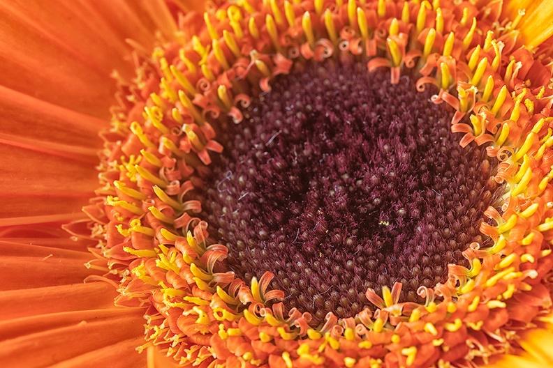 Another bouquet flower
