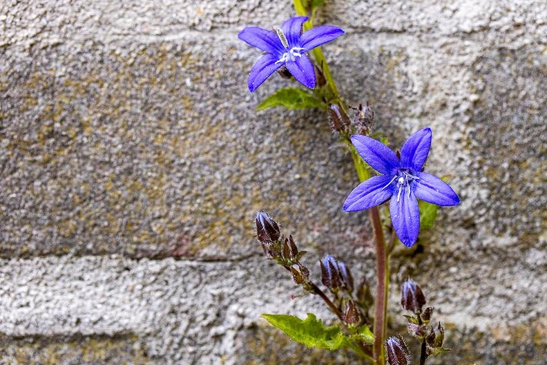 Detail of my garden