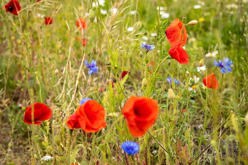 Wild flowers in the wild