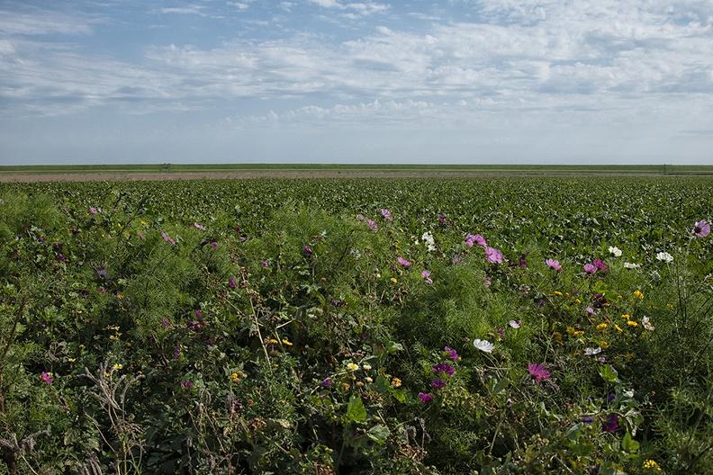 Flowers, field and dike on a bike ride