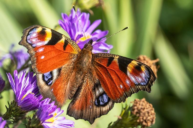 A beauty in the garden
