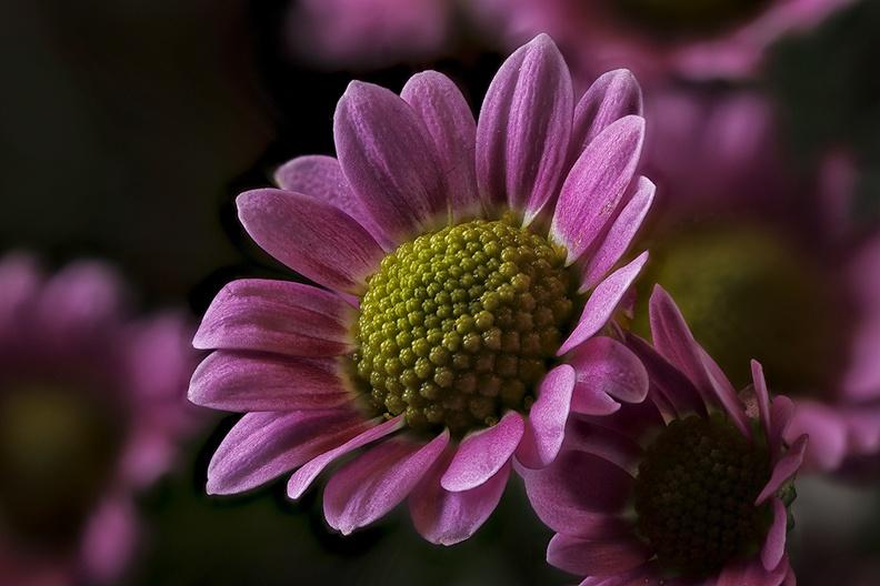 A small (fresh) flower