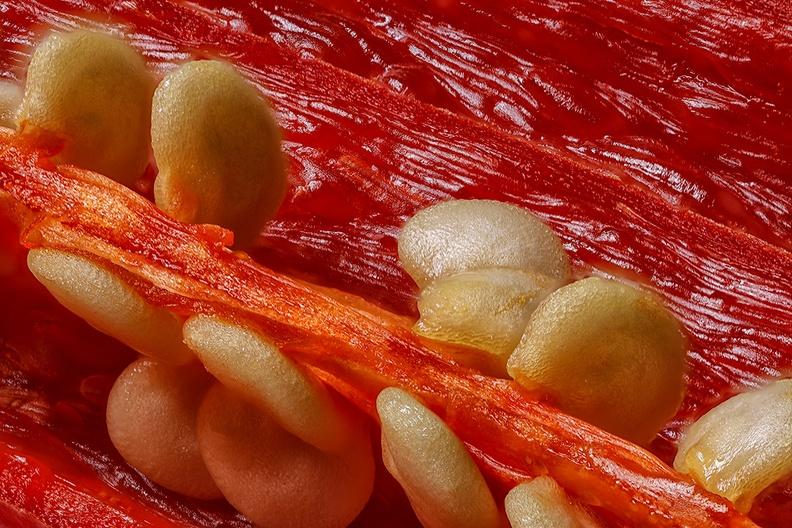 Inside of a chili pepper