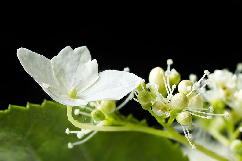 A small flower from my garden