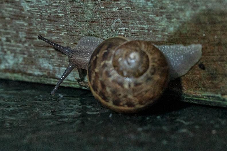 A snail on my garden table after the rain