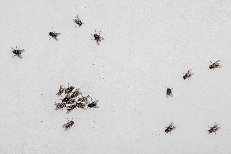 20 flies having a party  on a garden chair