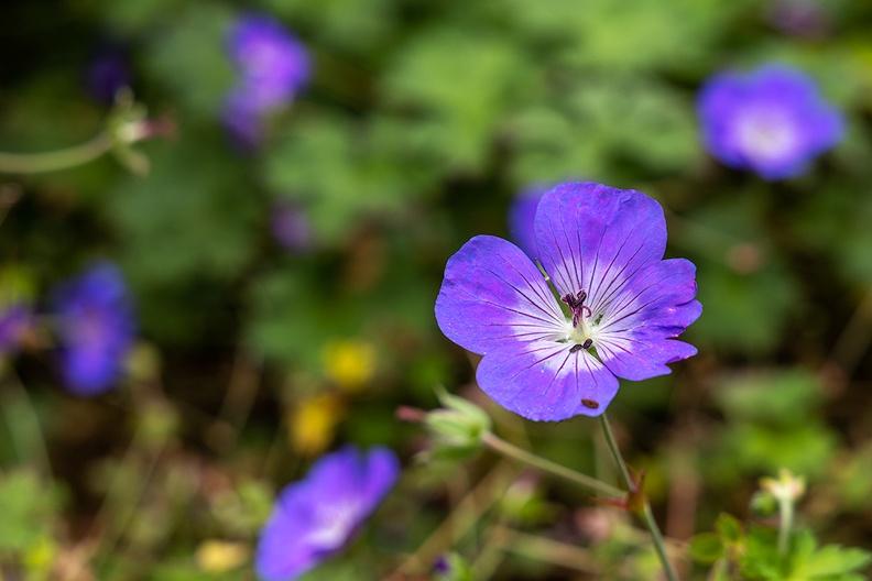 More flowers in my (vaction) garden