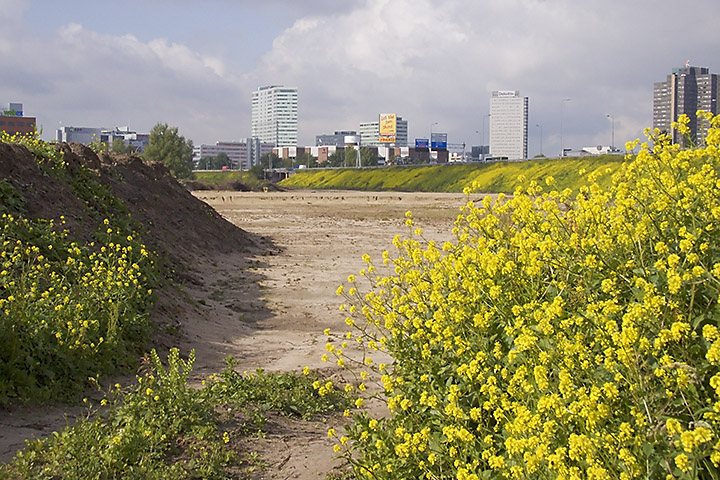 On my way to work. Almost the beginning of the city. There used to be grass and trees here to hide the highway, now there is just sand and yellow flowers, in the future there will be buildings, I suppose.